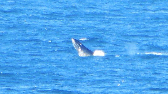 Whale Watching Byron Bay Australian East Coast Road Trip